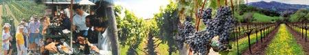 vineyard tour for Christmas event